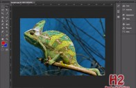 Animasi Warna Bunglon dengan Adobe Photoshop CS6 thumbnail